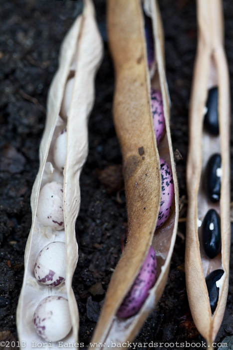 Dried heirloom beans are easy to store.