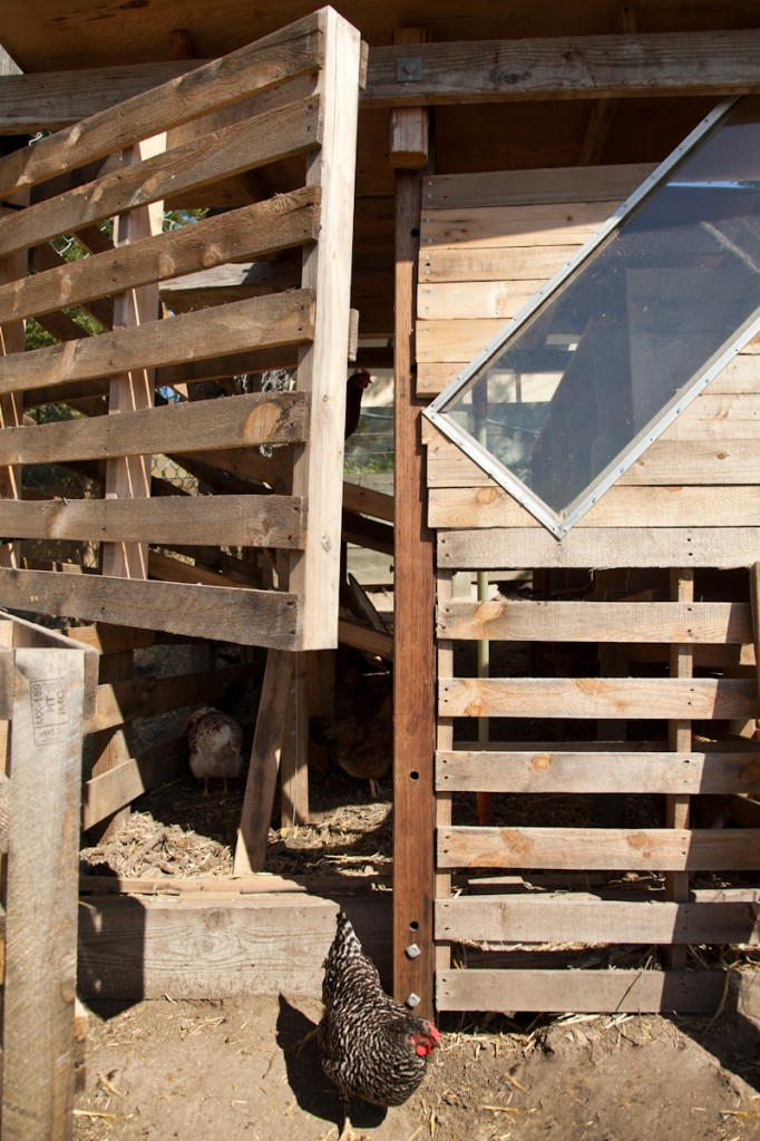 Maya and Nevada's chicken coop made from old pallettes.