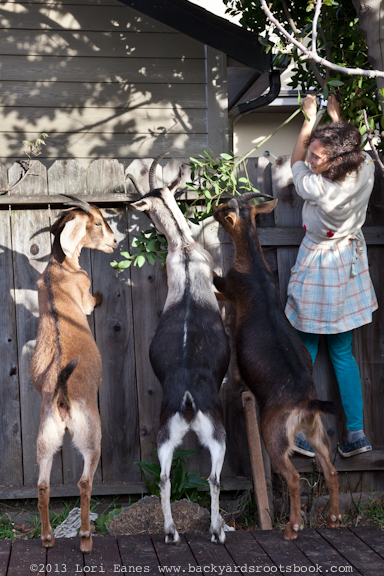 Mali McGee with some of her six goats and sheep in Alameda.