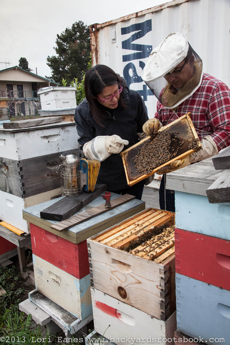 Jean Chen and Christian Bauer check one of their hives in Alameda California.