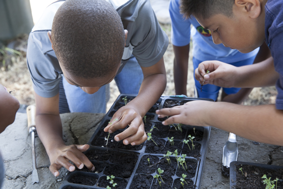 Kids learn about thinning seedlings at the Acta Non Verba summer camp.