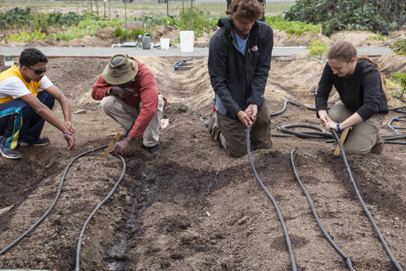 Joseph Davis(in red), farm manager works with the youth crew and volunteers to put in the drip irrigation system at West Oakland Farm Park